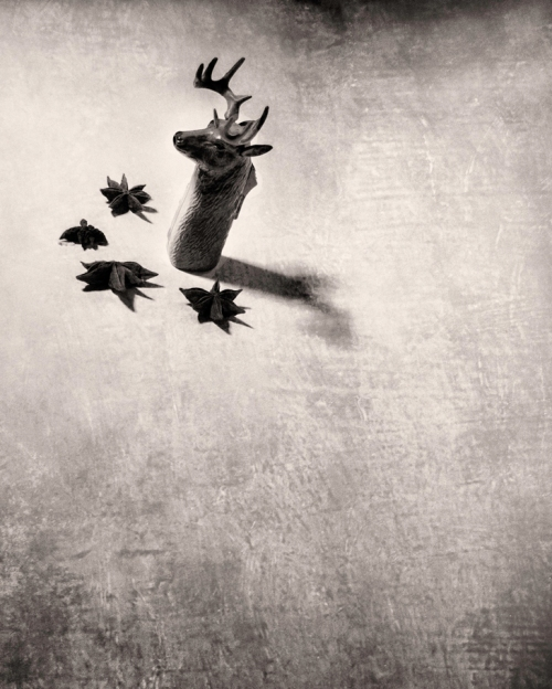 "Jerome Skiscim, ""Deerhead Lighter and Star Anise,"" 10"" x 8,"" Archival Pigment Print"