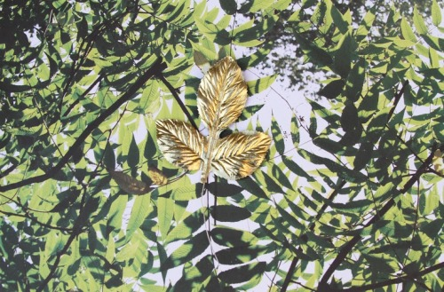 Gold Leaf, Archival Inkjet Print, 1/5, 24 x 36 inches, 2013